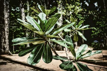 Young palm tree Reklamní fotografie