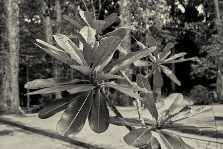 Leaves of a young palm tree