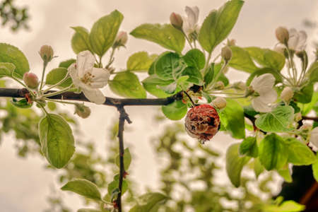 dry apple and flower