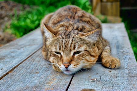 the cat is lying on a wooden table