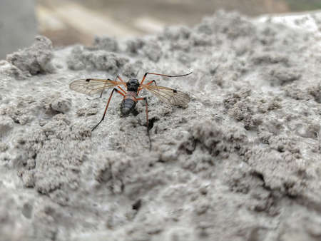 Winged insect