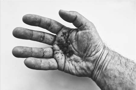 hand, hands, hold, finger, fingers, white, isolated, senior, black, body, person, people, skin, hold, ear, thumb, palm, elderly, handful, coffee, grain, monochrome, black and white, abstract
