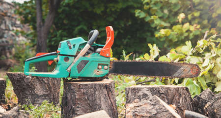 Chainsaw on cut logs into the woods. Tree cutting