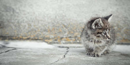 Portrait of a little kitten in outdoors.