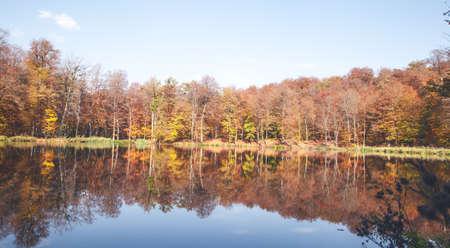 Autumn trees with a lake. Zdjęcie Seryjne