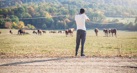 Photographer takes pictures of horses in pasture. Zdjęcie Seryjne
