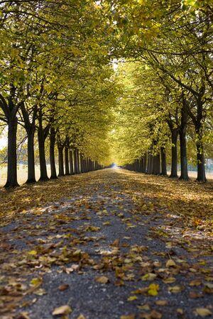 Camino que se ejecuta a través de un callejón de árbol otoñal. Foto de archivo
