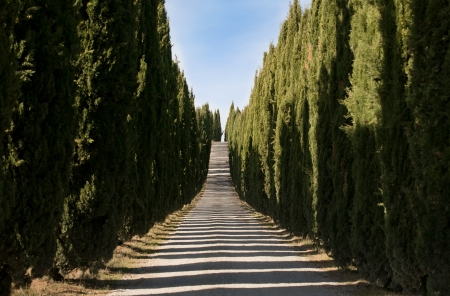 typical tuscan cypress alley Stock Photo - 17618325