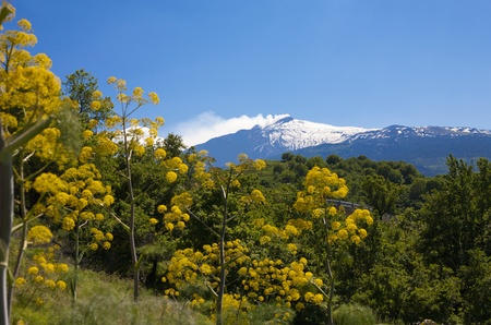 Beautiful landscape of the Etna vulcan with yellow flowers in the front. Stock Photo