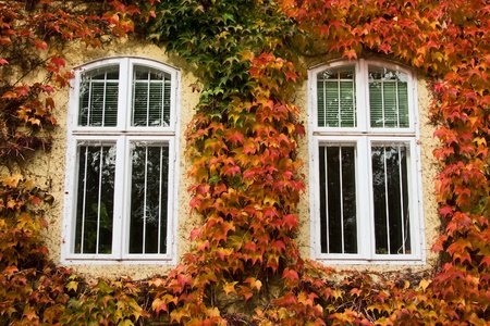 Two windows enclosed by autumnal foliage