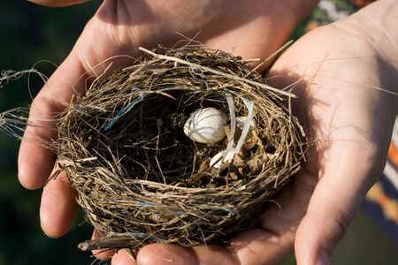 Hands hold a Bird nest with two eggs. Stock Photo - 17618209