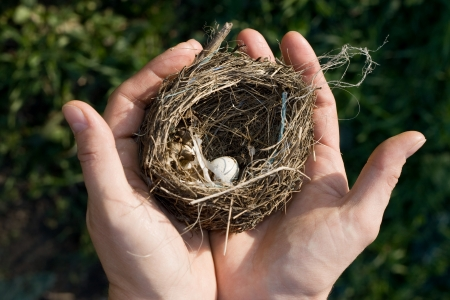 Bird nest with a tiny white egg in a woman's outstretched hands in front of a natural green background. Stock Photo - 17617052