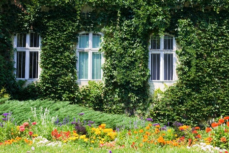 Evergreen foliage surrounding three windows on an ivy covered wall and colorful flowers in the front  Stock Photo