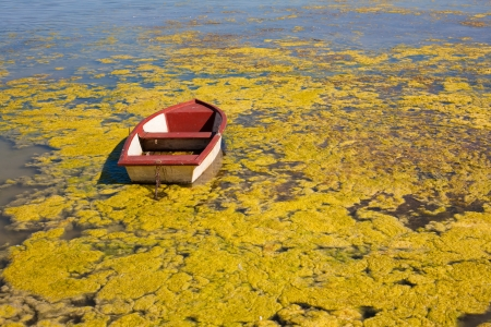 desiccation: Red boat and the lake water covered algas - illustration for global warming