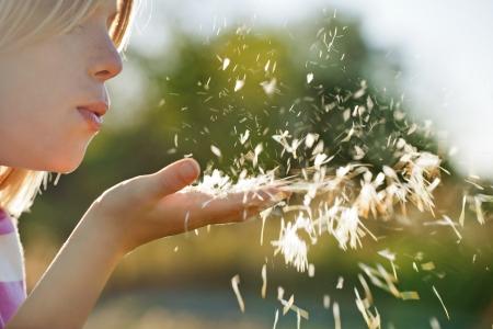 Kid blowing dandelion Stock Photo