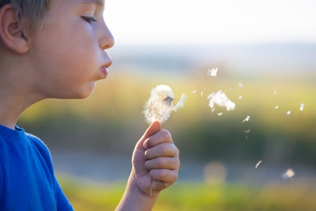 Cute small boy blowing a dandelion