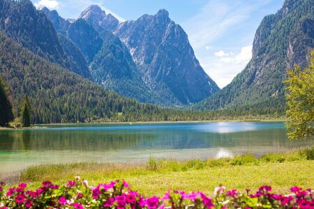 sudtirol: Lake dobbiaco with flowers in the front (Dolomites mountain, Italy, Sudtirol)