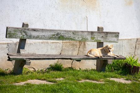 rundown: Dog resting on a run-down bench