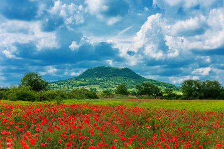 Campo de la amapola en la montaña delante y cloudscape dramático en la parte posterior (Kali Cuenca, Badacsony Montaña en Hungría)