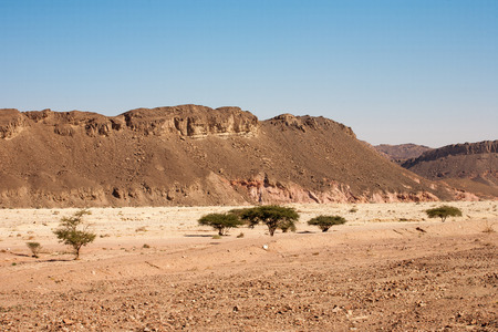 Stone desert with acacia trees at Timna National Park in Israel