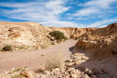 canyon negev: The entrance of the Red Canyon tourist attraction with acacia trees in Israel Stock Photo
