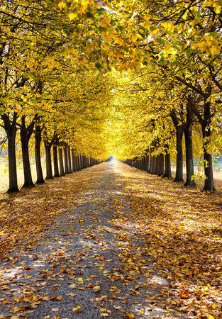 Autumn alley with yellow leaves from Tuscany, Italy. Image orientation: portrait