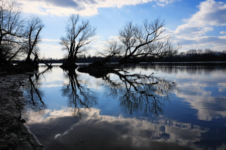 Artistic photo of bare trees silhouettes at a river coast reflecting on water surface with a nice cloudscape Foto de archivo