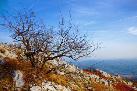 Autumnal landscape of a lonelly bare tree on a mountain top