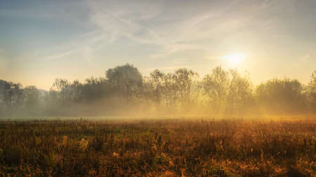 lens flare: Foggy morning in the field