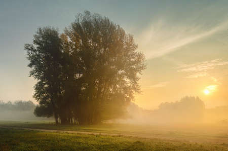 Sunrise on a foggy meadow with trees photo