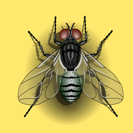 sassy: Green fly on a yellow background Illustration