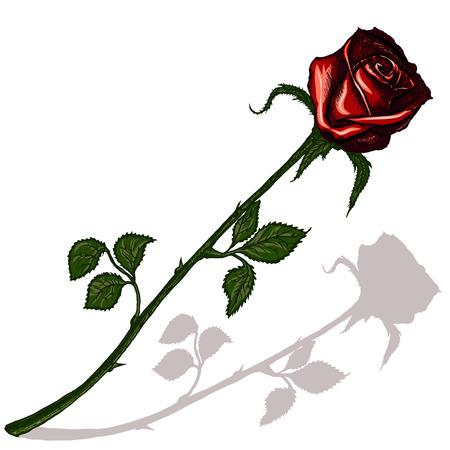Rote Rose mit Schatten auf einem leeren Hintergrund Standard-Bild - 58586080