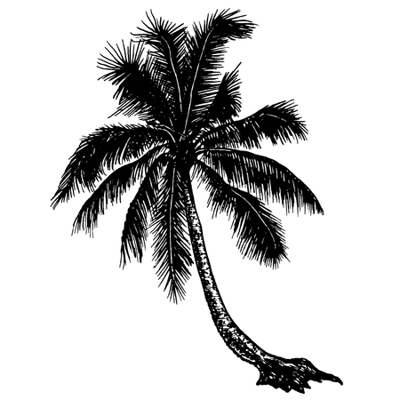silhouette tropical palm trees at the seaside on a blank background Векторная Иллюстрация