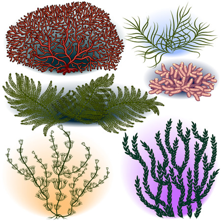 Collection of algae and corals on a blank background