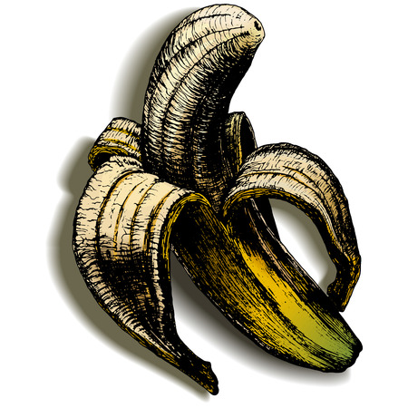 colored engraving brushed bananas on an empty background with the real shadow Illustration