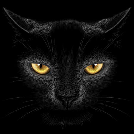 nimble: Head realistic black cat on a black background
