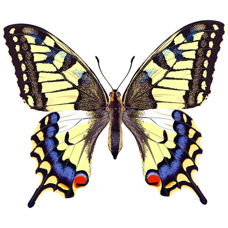 Realistic swallowtail butterfly on a blank background