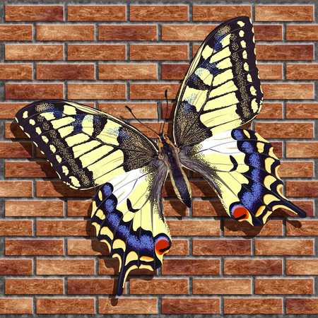 Realistic butterfly mahaon with shadow on the brick wall