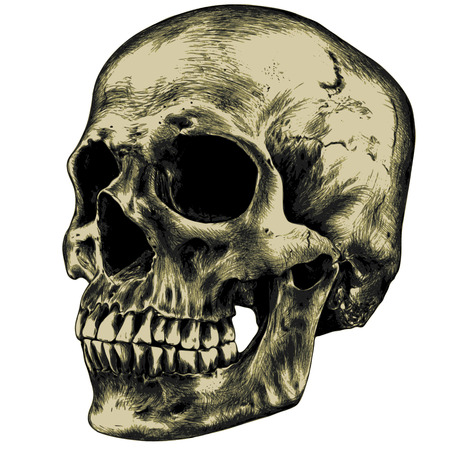 Yellow human skull on a blank background