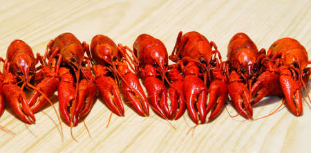 langouste: Row of a red crayfishes, wooden background Banque d'images