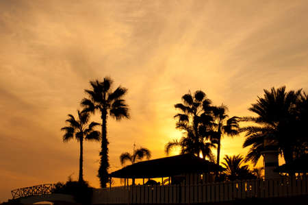 Warm evening in Mediterranean. Palm silhouette with sunset