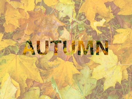 Background of orange maple leaves with congratulatory inscription Autumn