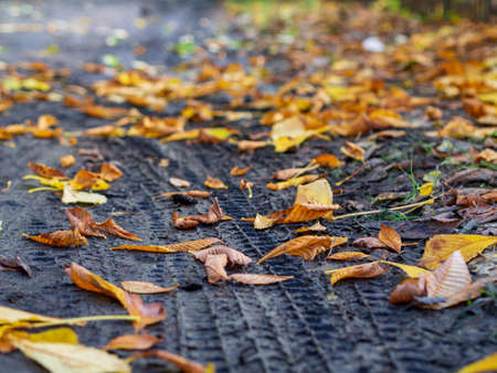 an image of single fallen leaf on ground Banque d'images