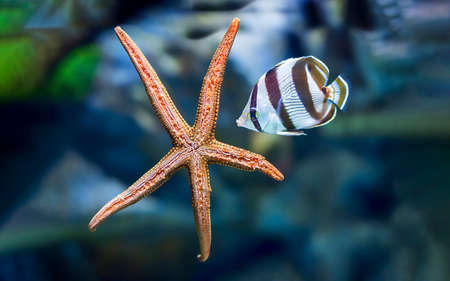 Underwater tropical fish with starfish close up.