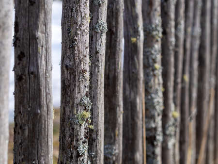 Old fence made of wooden planks, in the style of rustic, grunge, old fashion, worn gray-green color with nails