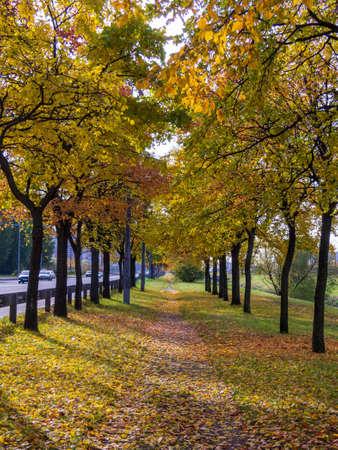 Autumn park alley bench autumn landscape