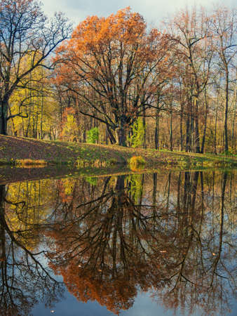 Autumn landscape. The tree is reflected in the lake Фото со стока