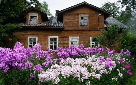Old wooden house in Vyborg with blooming flowers in front of the house