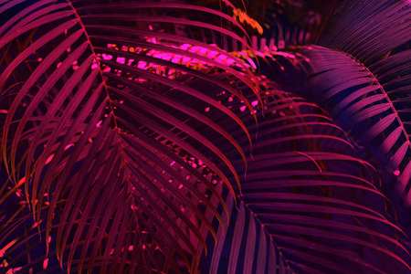 Bright tropical leaves of paradise, palm leaves in neon light
