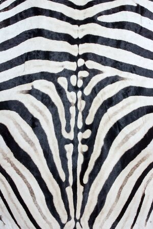 Plains zebra print, natural Zebra background black white